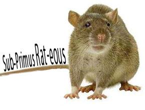 Sub Prime Rat