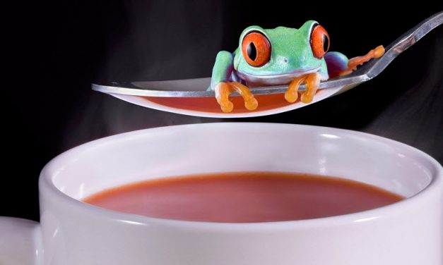 TDI Podcast: Frog Soup MOMO with Jack Vogel (#487)