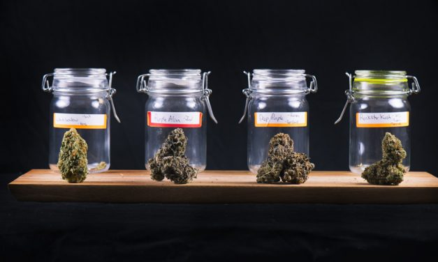 TDI Podcast: Cannabis Flower Power (#620)
