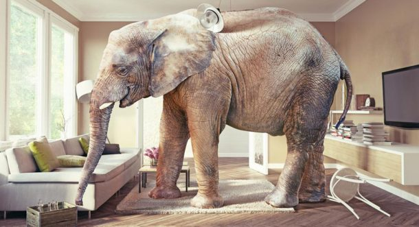 TDI Podcast: The Elephant in the Room (#677)